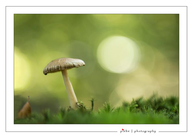 Paddenstoel  - Deze paddenstoel trof ik eergisteren aan in het bos. Ik moest wel door de knieën om hem er goed op te krijgen.<br /> <br /> Groet  <a