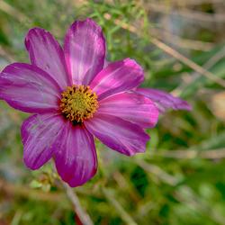 Nog een bloem...