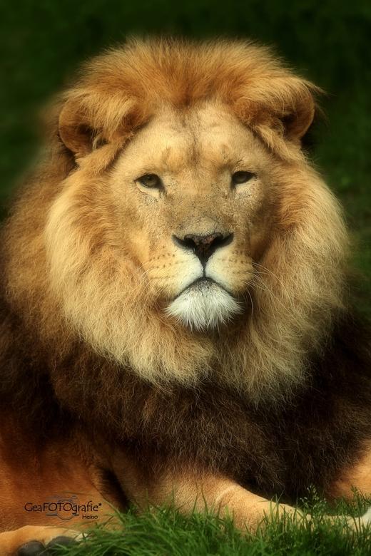 King *