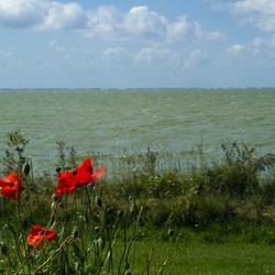 IJsselmeer bloemen