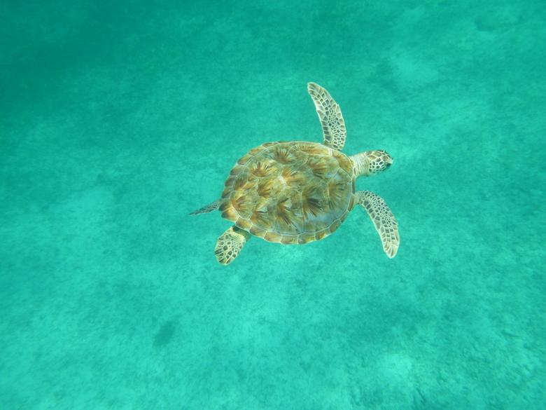 Vliegen onder water. -
