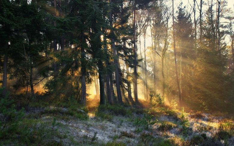 Warm golden rays - Locatie: De Ugchelse Berg, Het Leesten.<br /> <br /> Mijn zoompauze heeft wat langer geduurd dan ik aanvankeljk van plan was. Eer