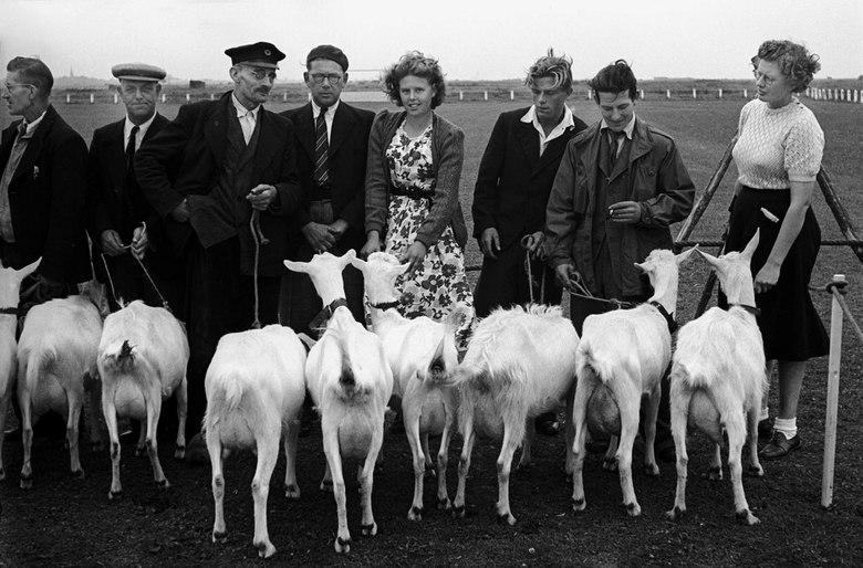 geitenvereniging - Juli 1950; geitenvereninging.<br /> Fotograaf; Harry Bedijs.<br /> Copyright; Stichting Foto Bedijs.