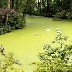 ons groen kikkerlandje, oftewel meer….