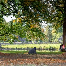 kastanjes rapen in stads park .groot zien svp