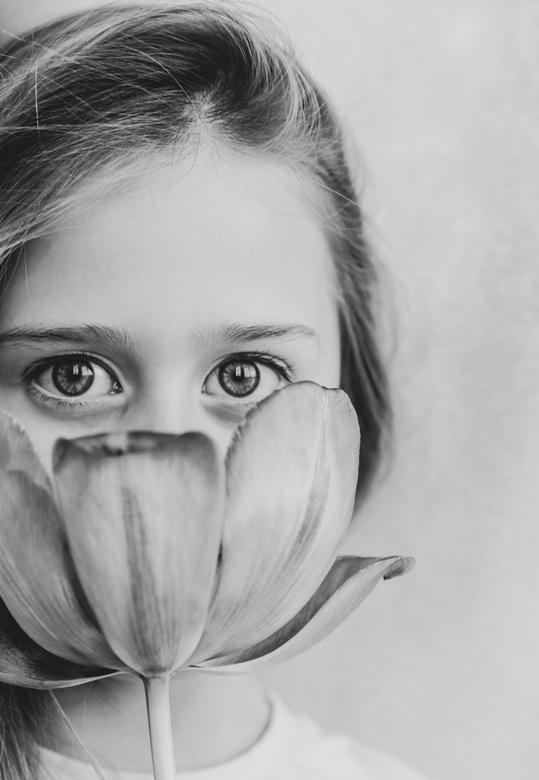 Tulip`s eyes. -