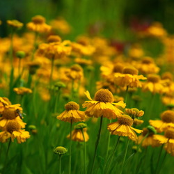 Botanische Tuin Terwinselen