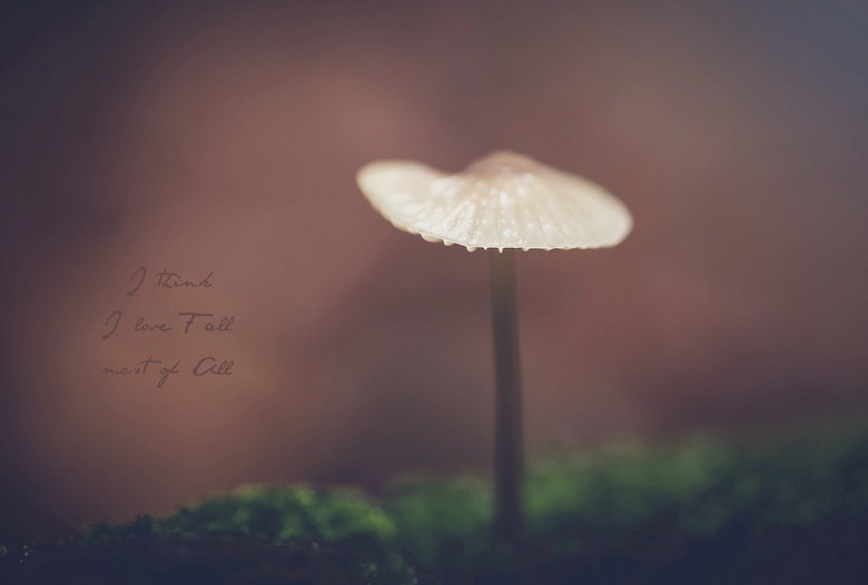 Fall - paddenstoel