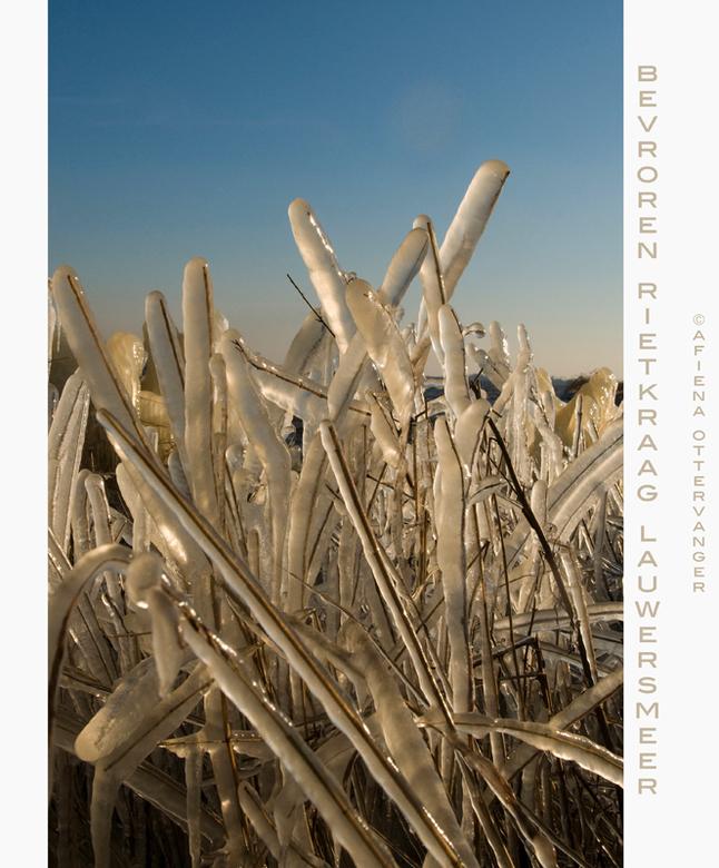 bevroren rietkraag Lauwers 02meer - Nog een foto van de bevroren rietkraag aan het Lauwersmeer afgelopen maandag. Mooi was ook te zien hoe het zonlich