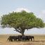 Olifanten zoeken schaduw