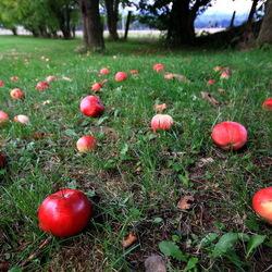 An apple a day.....