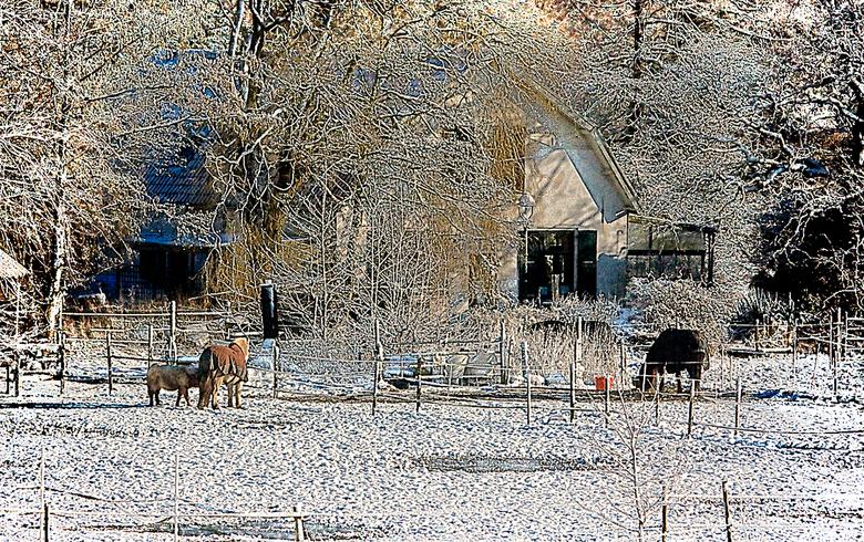 Winter in HDR - Uitzich vanuit ons huis, omgezet in HDR.
