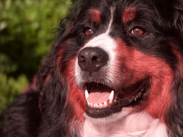 de hond van PINk - bewerkte foto, een foto van de hond, een grijze laag eroverheen ge&#039;goten&#039;, en overvloeimodus op hue/tint.<br /> <br />