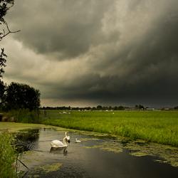 Onweer boven de zwanen