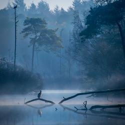 Bleu Magic - Oisterwijkse Vennen