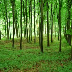 Bois Des Loges 2008