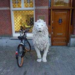 Geketende leeuw bewaakt fiets