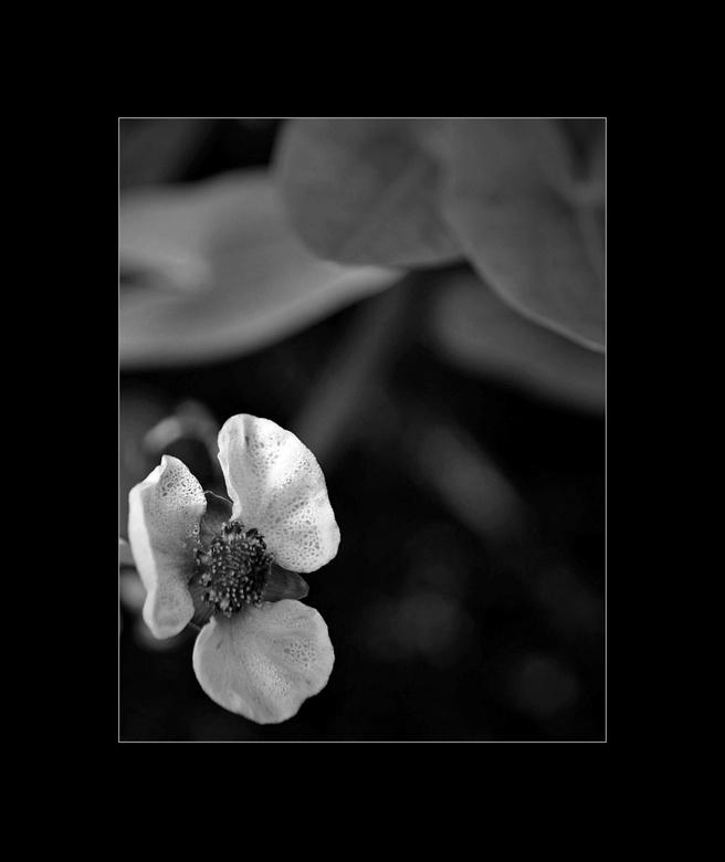 Gefocust...  - Wat je met het blote oog niet ziet...<br /> Maar wel met de macro lens... De structuur van het blad..van de kikkerbeet in de vijver. <