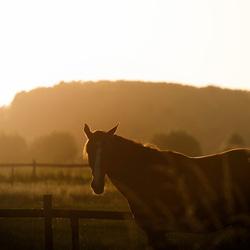 Paard - Gouden Uurtje