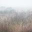 Grazers in de mist