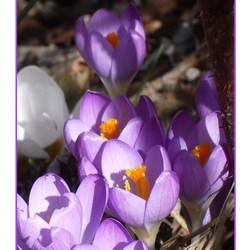 Voorjaar op komst!
