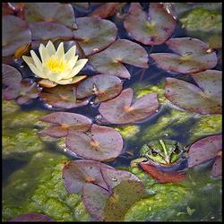 froggies garden..