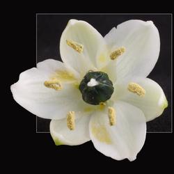 Klein bloemetje.