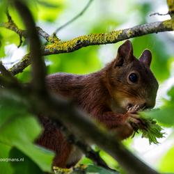 Eekhoorntje in de boom op de camping in Cassagnabere -Tournas