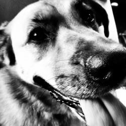Mijn hond Bounty