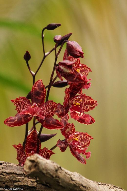 """Orchideeënhoeve Luttelgeest - Bedankt voor het kijken en de reacties op <a href=""""http://zoom.nl/foto/2271487/architectuur/high---end.html?object=user&"""
