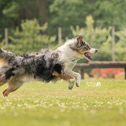 Run! Milo run!