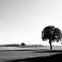 Eenzame boom (zwart/wit)