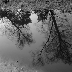 Reflection in a puddle . . .