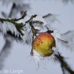 Winter in Fryslân