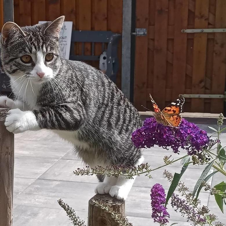 gevleugeld verlangen - Onze poes verkent de natuur met bewonderende blik. Of heeft ze vlinders in haar buik?