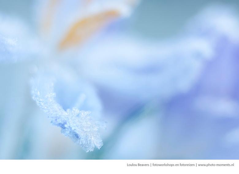 Frozen spring - Nog uit de vorstperiode. Inmiddels dansen de muggen al weer.