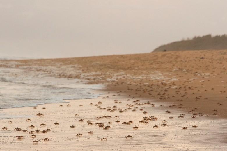 Nieuwjaarsduik der crustacea - Honderden meters lang liep ik over het strand en was dit mijn uitzicht, krabben die zijwaarts het water inrenden en ach