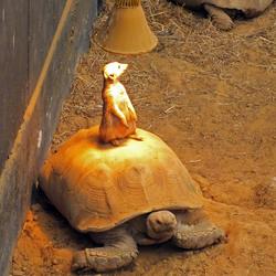 Stokstaartje onder lamp