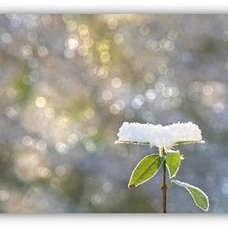 spring-power