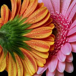 Flowers Kissing