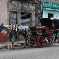 Straatopname Cuba(horse)