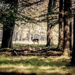 Op wacht in het Veluwse bos