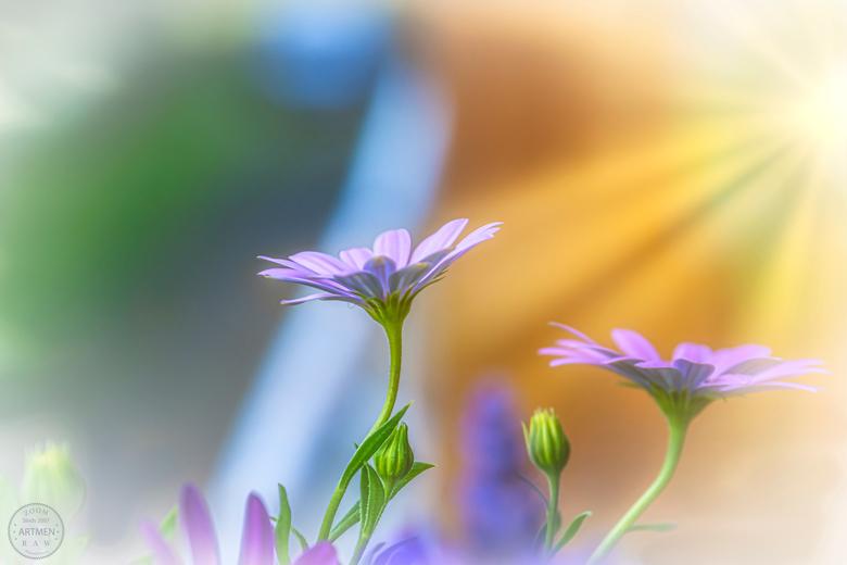 Mystical photo - Al weer regen. Nou ja dan maar een Mystieke foto bloem plaatsen.
