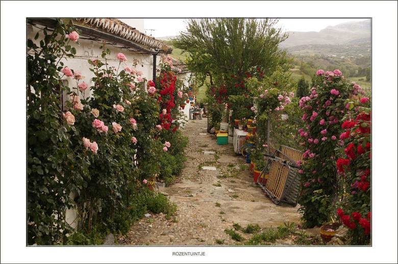 Rozentuintje - Zomaar een tuintje vol met rozen. Dankzij de kleurige rozen valt het niet op dat er ook nogal wat troep ligt.<br /> <br /> Iedereen b