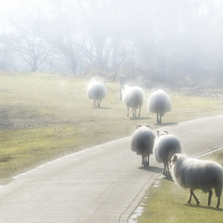 Die gaan de mist in