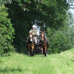 Tweespan pony's voor de marathonwagen
