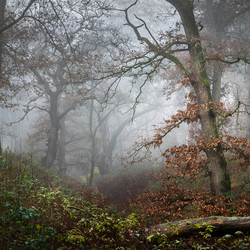Atmospheric forest
