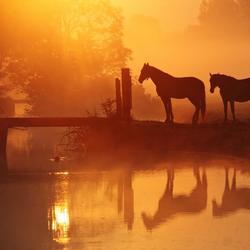 Paarden in goud