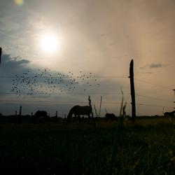 Paarden en vogels in de avond