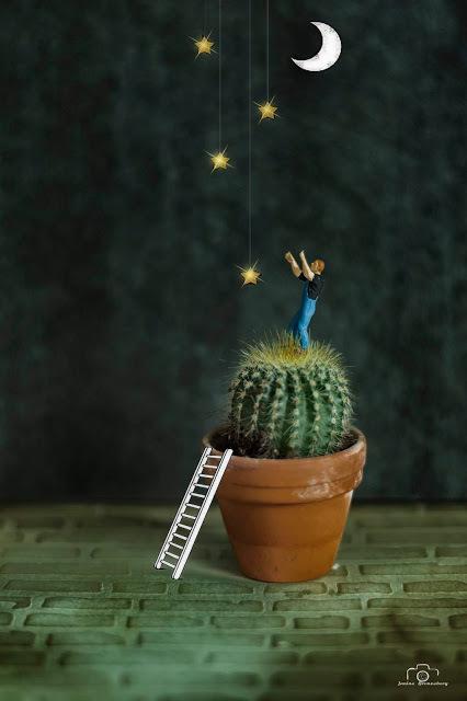 Reach for the stars,  even if you have to stand on a cactus.    - Susan Longacre -  - Deze foto is gemaakt na het lezen van een quote van Susan Longac